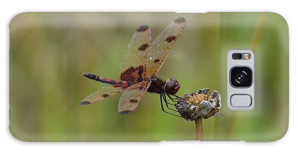 Calico Pennant Galaxy Case by Randy Bodkins