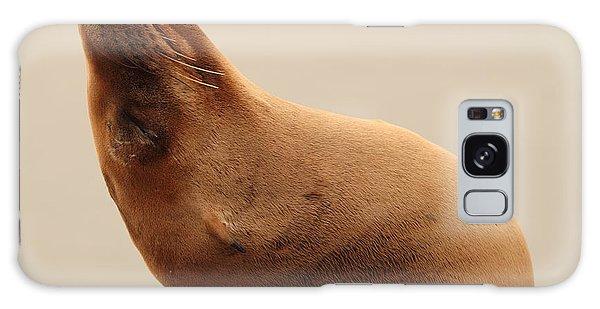 California Sea Lion In Angle Of Repose Galaxy Case by Max Allen