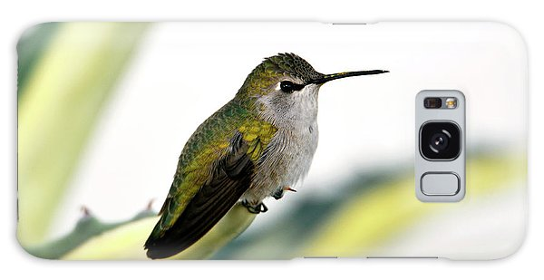 Calliope Hummingbird On Agave Galaxy Case
