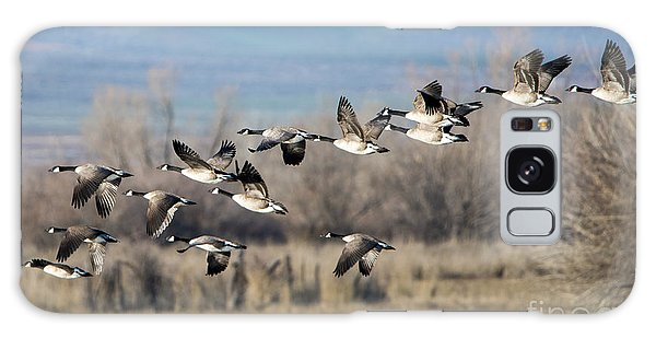 Canada Goose Galaxy Case - Canada  Geese Flock by Mike Dawson