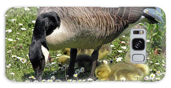 Gosling Galaxy Case - Canada Goose And Goslings by Gill Billington