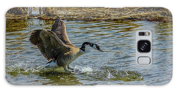 Canada Goose Takes Flight, Frank Lake, Alberta, Canada Galaxy Case