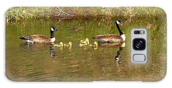 Gosling Galaxy Case - Canadian Geese At Schwabacher Landing by Adam Jewell