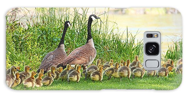 Gosling Galaxy Case - Canadian Geese Family by Jennie Marie Schell