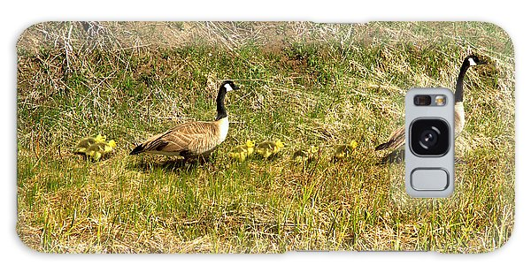 Gosling Galaxy Case - Canadian Geese Family Stroll by Adam Jewell