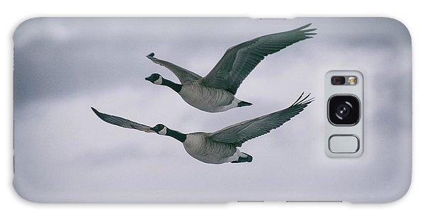 Canadian Geese In Flight Galaxy Case
