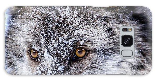 Canadian Grey Wolf In Portrait, British Columbia, Canada Galaxy Case