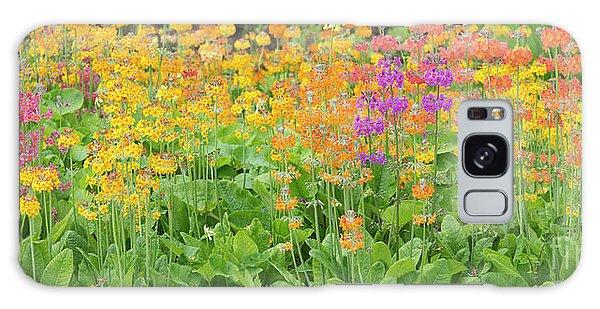 Hybrid Galaxy Case -  Candelabra Primula Flowers Panoramic by Tim Gainey