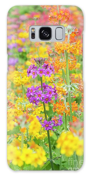 Hybrid Galaxy Case - Candelabra Primula Flowers by Tim Gainey