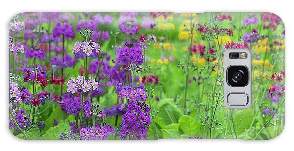 Hybrid Galaxy Case - Candelabra Primula Panoramic by Tim Gainey