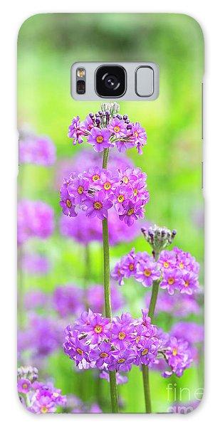Hybrid Galaxy Case - Candelabra Primula by Tim Gainey