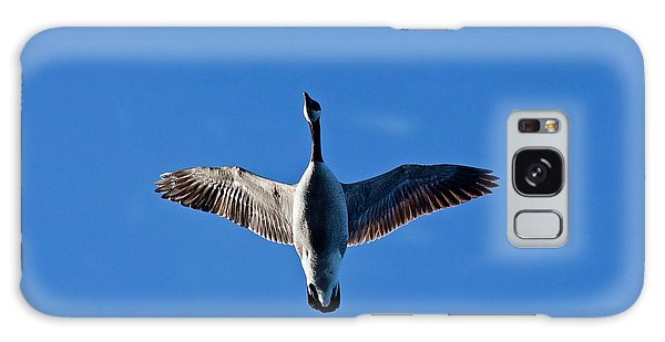 Candian Goose In Flight 1648 Galaxy Case by Michael Peychich
