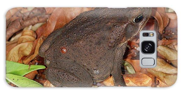 Cane Toad Galaxy Case