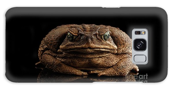 Cane Toad - Bufo Marinus, Giant Neotropical Or Marine Toad Isolated On Black Background, Front View Galaxy Case