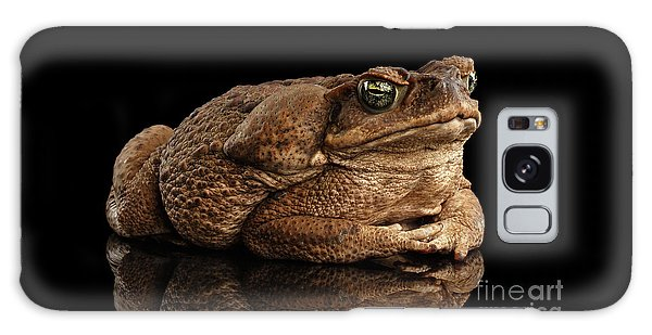 Cane Toad - Bufo Marinus, Giant Neotropical Or Marine Toad Isolated On Black Background Galaxy Case