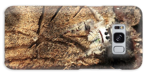 Canopy Jumping Spider Galaxy Case