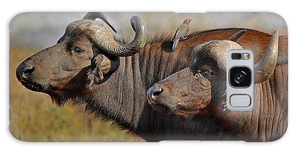 Cape Buffalo And Their Housekeeper Galaxy Case