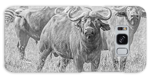 Cape Buffalos In Serengeti Galaxy Case by Pravine Chester