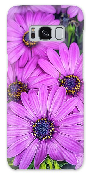 Cape Daisys - Purple Galaxy Case