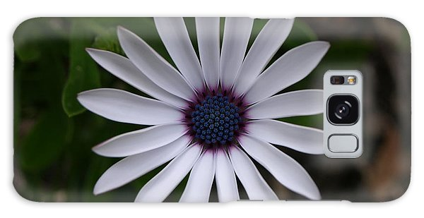 Cape Daisy Galaxy Case
