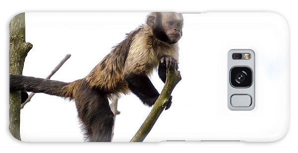 Galaxy Case featuring the photograph Capuchin Monkey by Scott Lyons