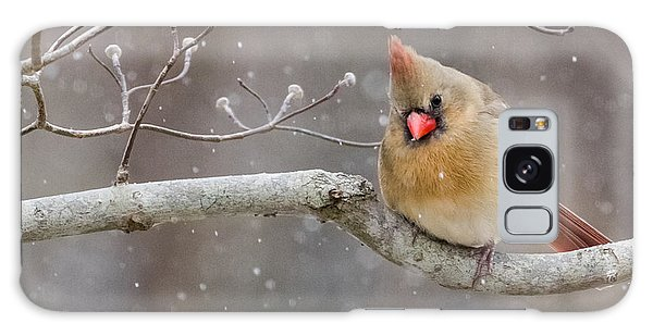 Cardinal And Falling Snow Galaxy Case