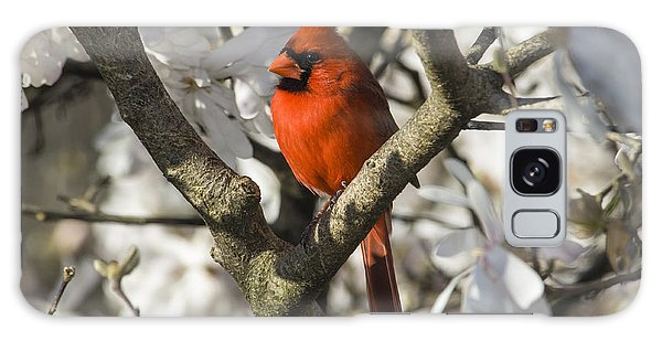 Feather Stars Galaxy Case - Northern Cardinal And Magnolia 1 - D009892 by Daniel Dempster
