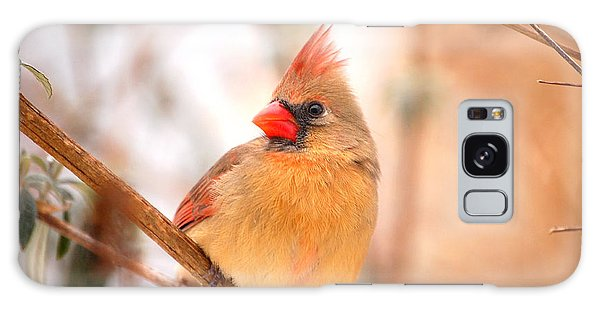 Cardinal Bird Female Galaxy Case