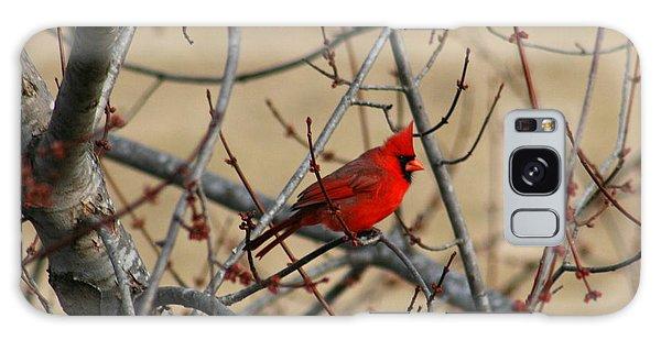 Cardinal Galaxy Case