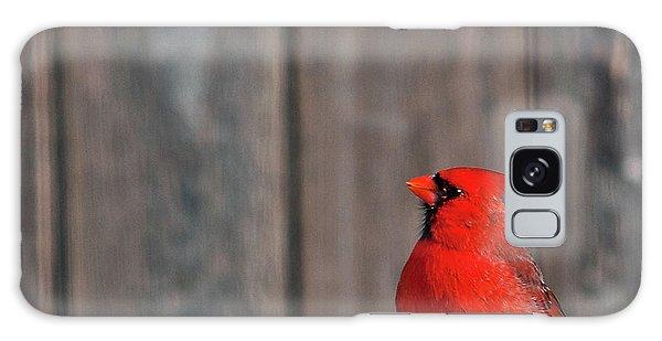 Cardinal Drinking Galaxy Case