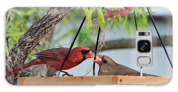 Cardinal Feeding  Galaxy Case