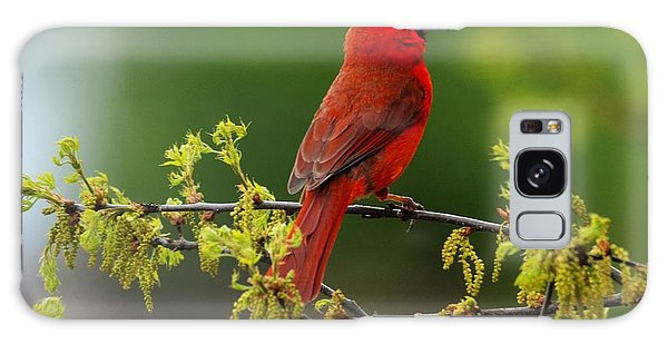 Cardinal In Early Spring Galaxy Case