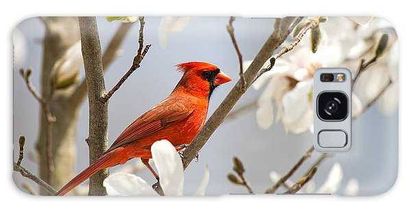 Galaxy Case featuring the photograph Cardinal In Magnolia by Angel Cher