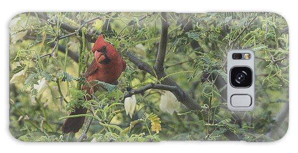 Cardinal In Mesquite Galaxy Case