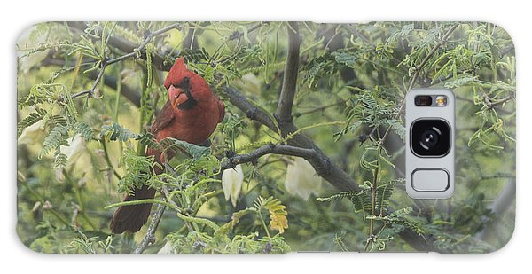 Cardinal In Mesquite Galaxy Case by Laura Pratt