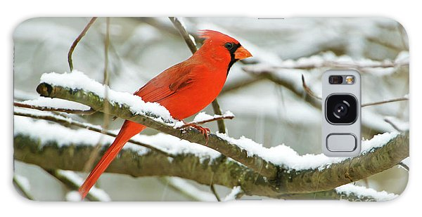 Finch Galaxy S8 Case - Cardinal In Snow by Laura D Young