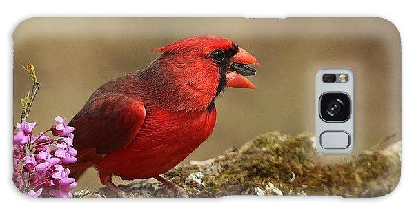 Cardinal In Spring Galaxy Case