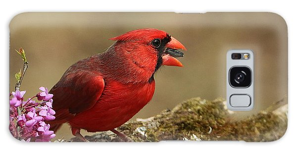 Cardinal In Spring Galaxy Case by Sheila Brown