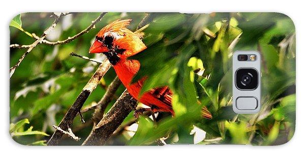 Cardinal In Tree Galaxy Case