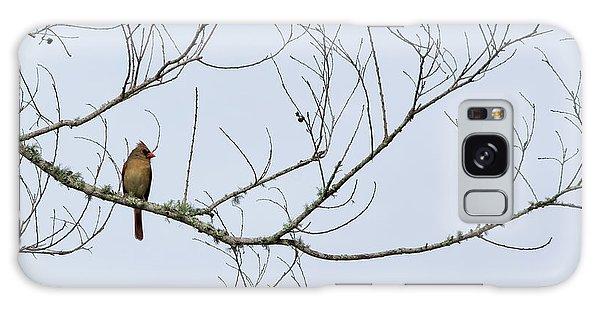 Cardinal In Tree Galaxy Case by Richard Rizzo