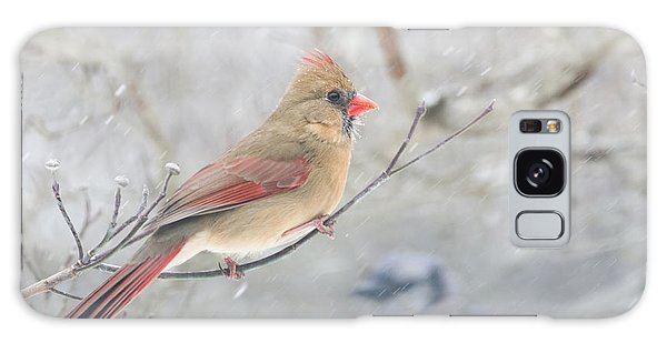Cardinal In Winter Galaxy Case