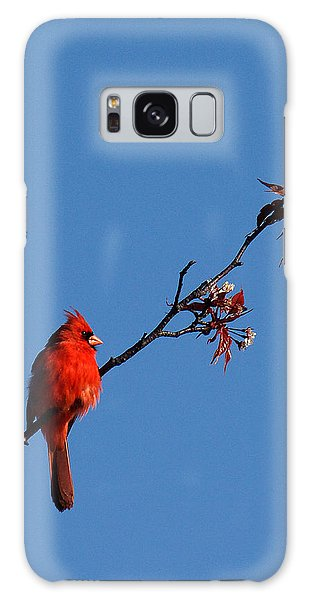 Cardinal On A Cherry Branch Dsb033 Galaxy Case by Gerry Gantt