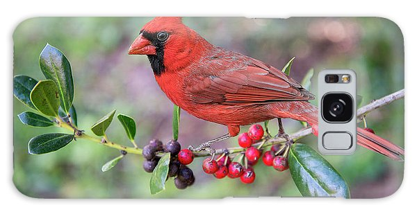 Cardinal On Holly Branch Galaxy Case by Bonnie Barry
