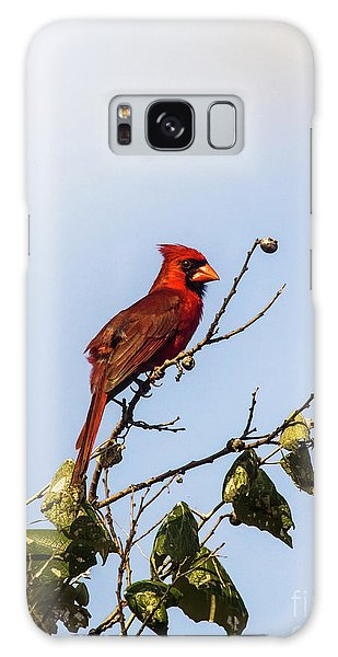 Cardinal On Treetop Galaxy Case by Robert Frederick