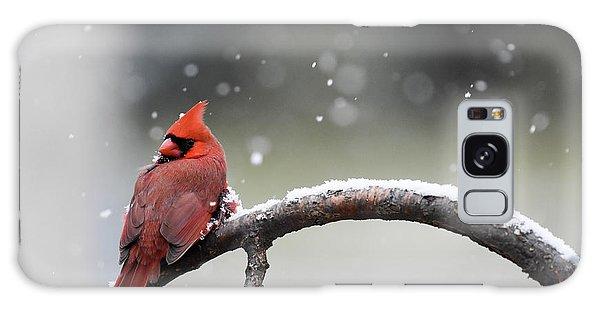 Cardinal Snowfall Galaxy Case