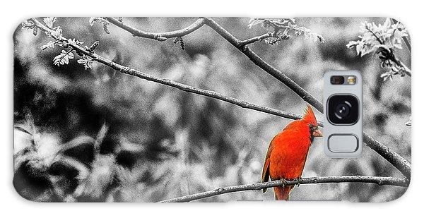 Cardinal... Galaxy Case