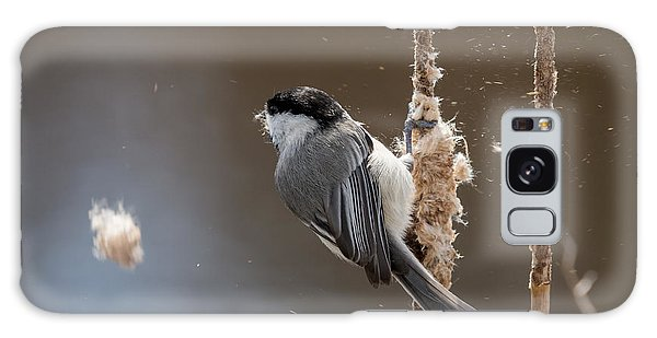 Carolina Chickadee Feeding On Cattail Galaxy Case