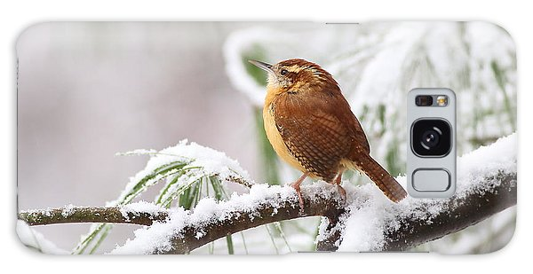 Carolina Wren In Snowy Pine Galaxy Case
