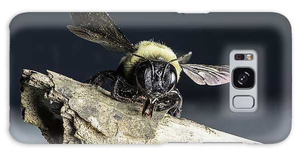 Carpenter Bee Galaxy Case