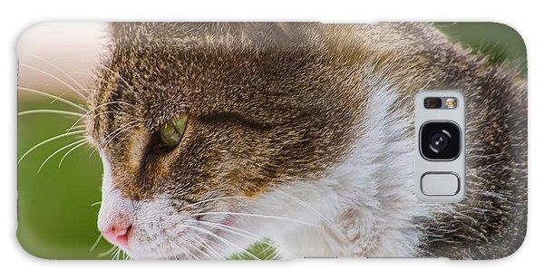 Cat Hunting Galaxy Case